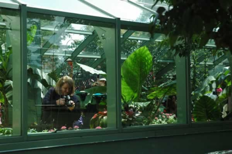 About Our Butterflies at Wings of Mackinac Butterfly Conservatory